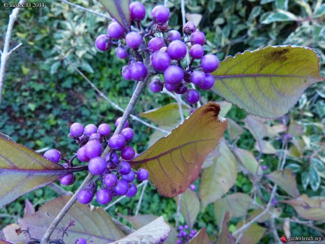 l'automne arrive... GBPIX_photo_638671
