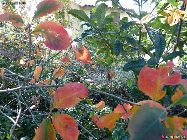 l'automne arrive... GBPIX_photo_638672