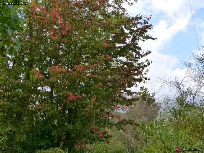 l'automne arrive... GBPIX_photo_639106