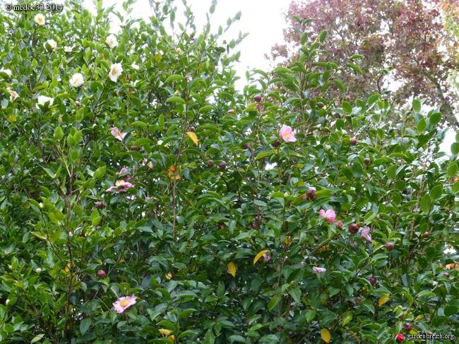 l'automne arrive... - Page 2 GBPIX_photo_640053