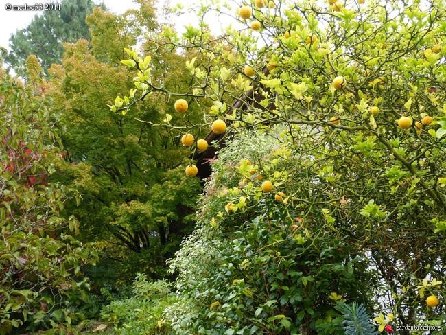 l'automne arrive... - Page 2 GBPIX_photo_640054