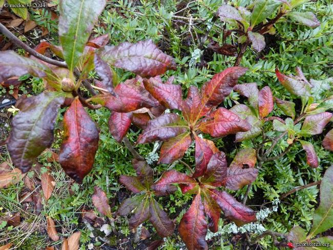l'automne arrive... - Page 2 GBPIX_photo_640055