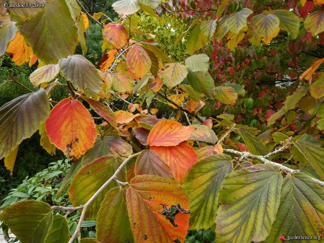 l'automne arrive... - Page 2 GBPIX_photo_640056