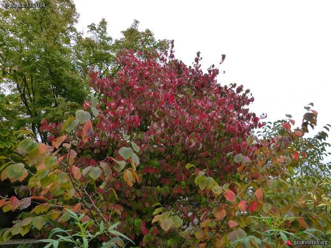 l'automne arrive... - Page 2 GBPIX_photo_640057