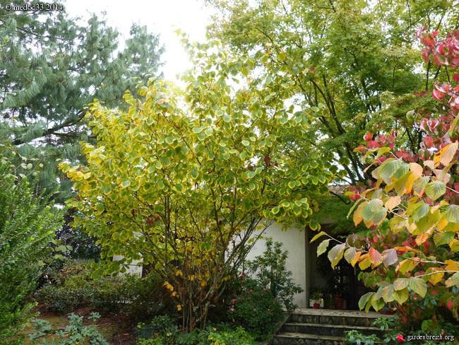 l'automne arrive... - Page 2 GBPIX_photo_640058