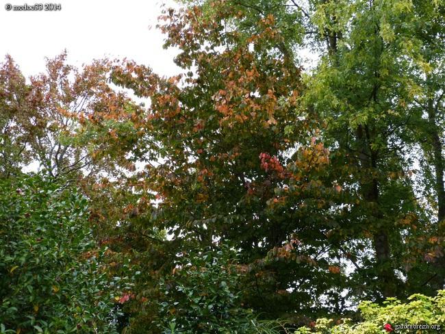 l'automne arrive... - Page 2 GBPIX_photo_640571