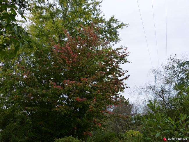 l'automne arrive... - Page 2 GBPIX_photo_640572