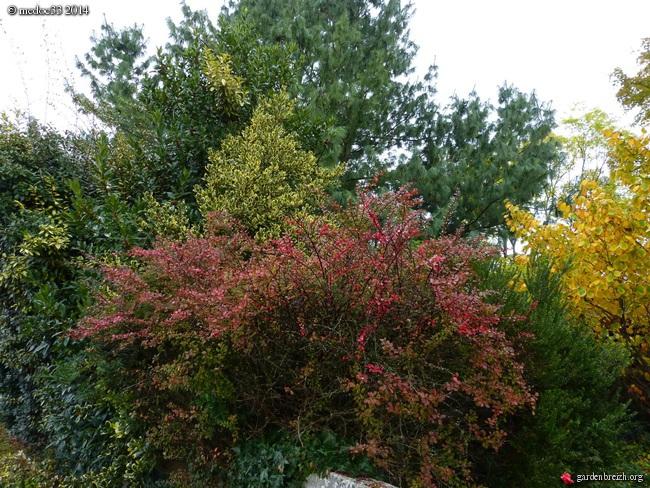 l'automne arrive... - Page 2 GBPIX_photo_640997