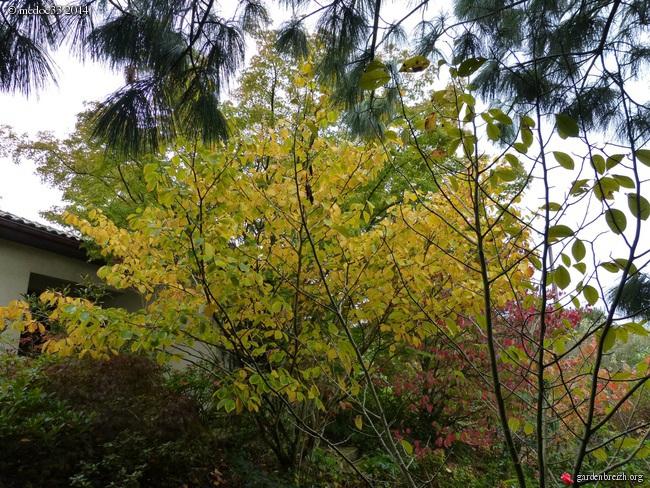 l'automne arrive... - Page 2 GBPIX_photo_640998
