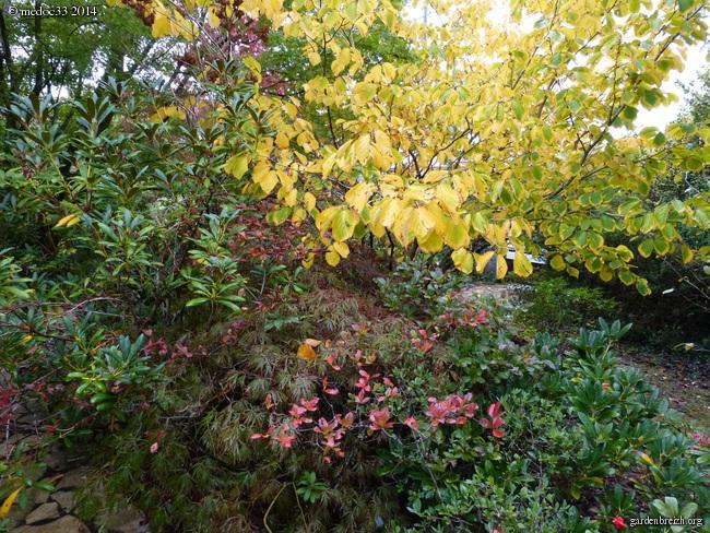 l'automne arrive... - Page 2 GBPIX_photo_640999