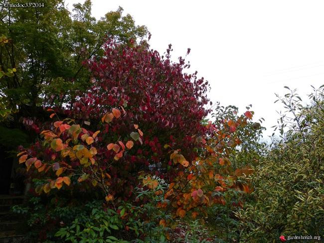 l'automne arrive... - Page 2 GBPIX_photo_641001