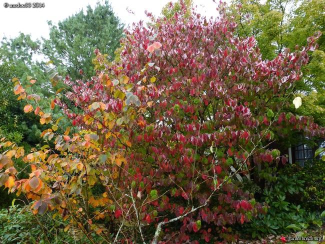 l'automne arrive... - Page 2 GBPIX_photo_641002