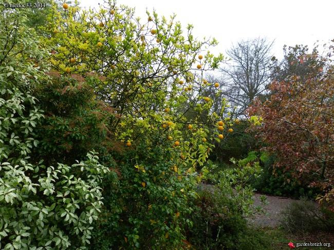 l'automne arrive... - Page 2 GBPIX_photo_641003