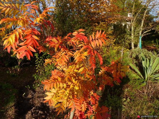 derniers flamboiements  au jardin  - Page 3 GBPIX_photo_641939