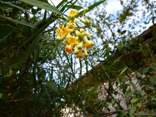 jardin des brumes - Page 5 GBPIX_photo_641940