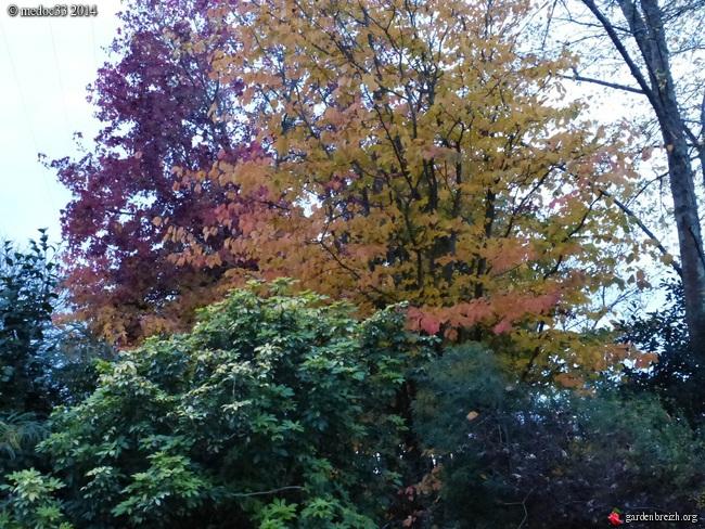 l'automne arrive... - Page 8 GBPIX_photo_641942