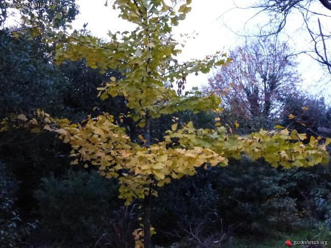 derniers flamboiements  au jardin  - Page 3 GBPIX_photo_641943