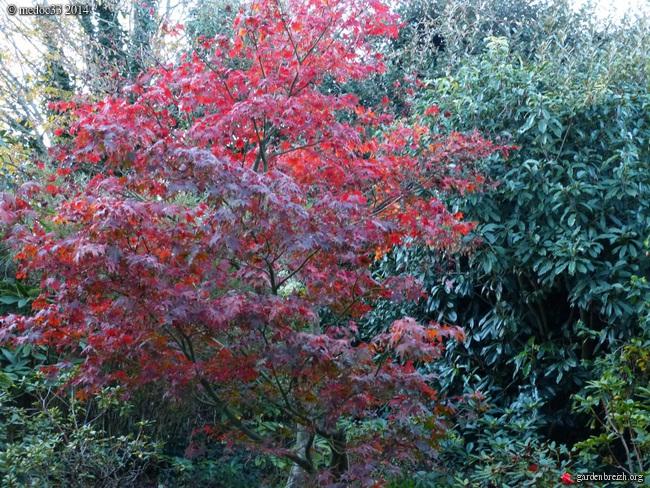 derniers flamboiements  au jardin  - Page 3 GBPIX_photo_641947