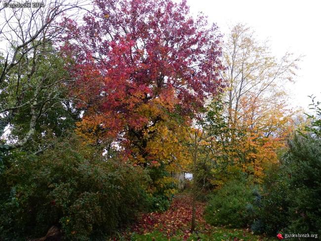 l'automne arrive... - Page 8 GBPIX_photo_641952