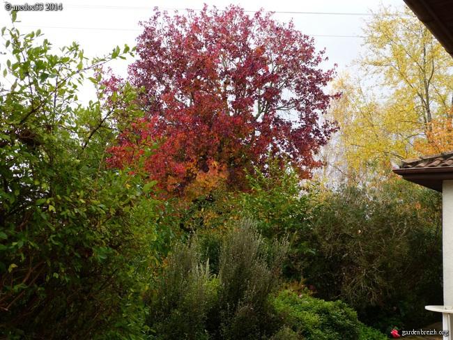 l'automne arrive... - Page 8 GBPIX_photo_641954