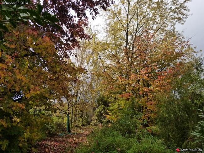 l'automne arrive... - Page 8 GBPIX_photo_641955