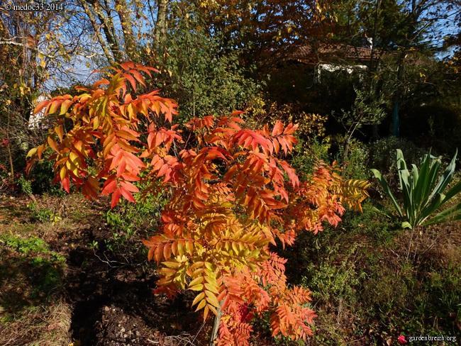 derniers flamboiements  au jardin  - Page 3 GBPIX_photo_641994