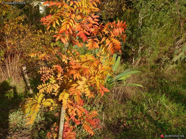 derniers flamboiements  au jardin  - Page 3 GBPIX_photo_641996