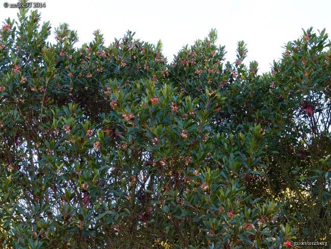 derniers flamboiements  au jardin  - Page 5 GBPIX_photo_642018