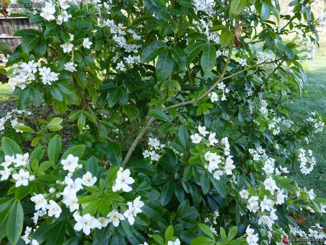 derniers flamboiements  au jardin  - Page 3 GBPIX_photo_642676