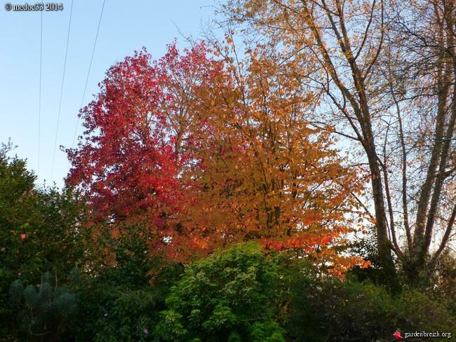 l'automne arrive... - Page 8 GBPIX_photo_642681