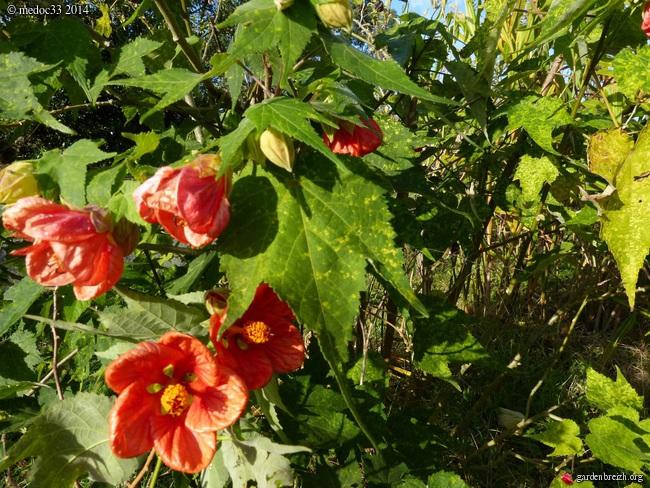 jardin des brumes - Page 5 GBPIX_photo_642685