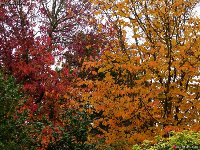 l'automne arrive... - Page 8 GBPIX_photo_644263