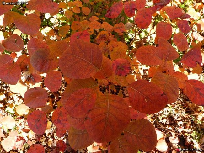 l'automne arrive... - Page 8 GBPIX_photo_644275