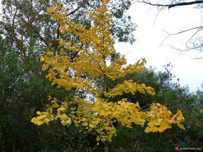 l'automne arrive... - Page 8 GBPIX_photo_644287