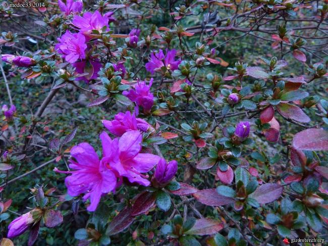 derniers flamboiements  au jardin  - Page 5 GBPIX_photo_645562