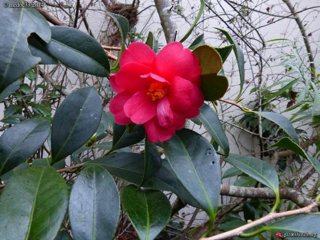 jardin des brumes - Page 2 GBPIX_photo_646547