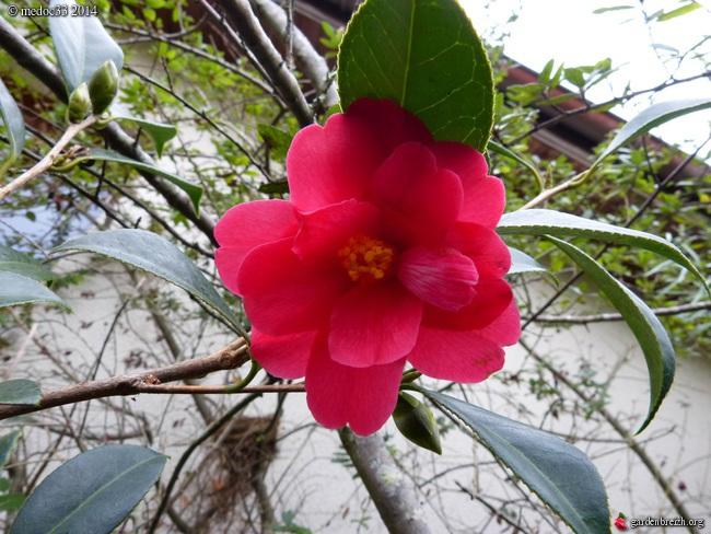 jardin des brumes - Page 4 GBPIX_photo_646548