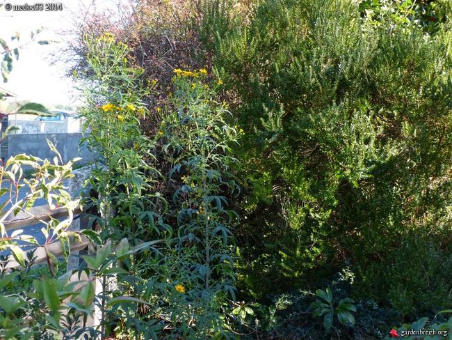 jardin des brumes - Page 2 GBPIX_photo_646552