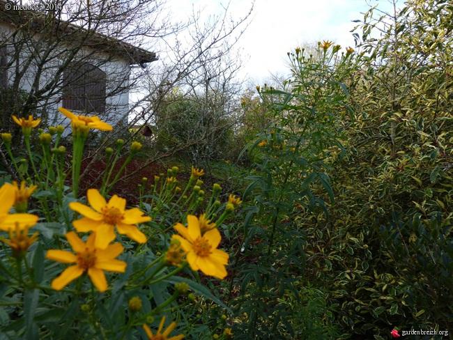 jardin des brumes - Page 2 GBPIX_photo_646553