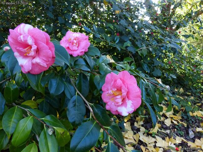 jardin des brumes - Page 2 GBPIX_photo_646591