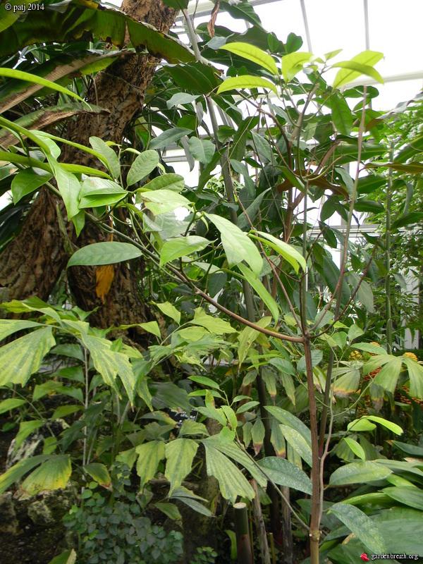 Les botanistes  - Page 8 GBPIX_photo_646700