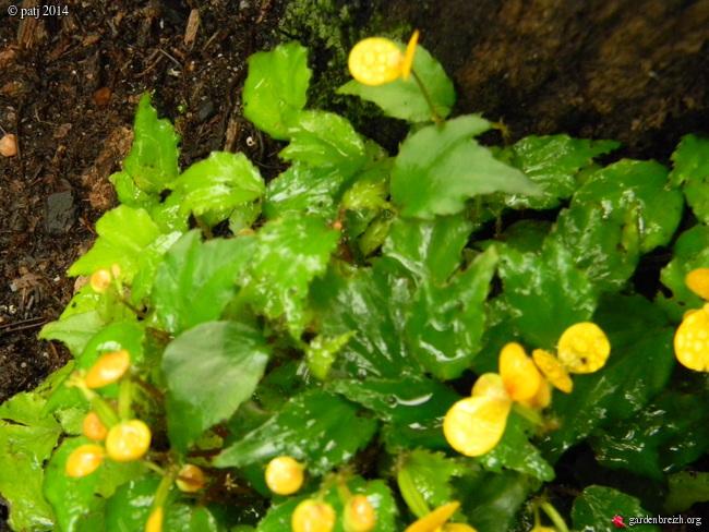 Les botanistes  - Page 7 GBPIX_photo_646810