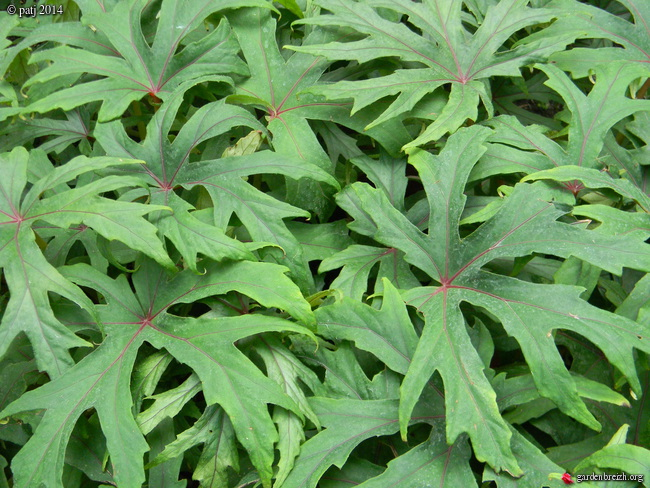 Les botanistes  - Page 7 GBPIX_photo_647158