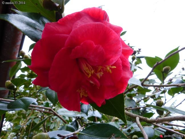 jardin des brumes - Page 4 GBPIX_photo_647299