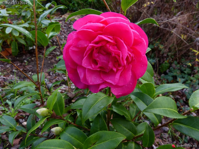 jardin des brumes - Page 5 GBPIX_photo_648660