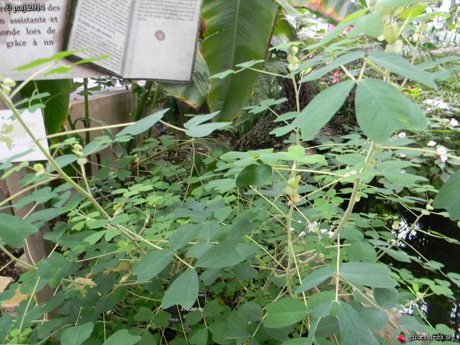 Les botanistes  - Page 5 GBPIX_photo_649386