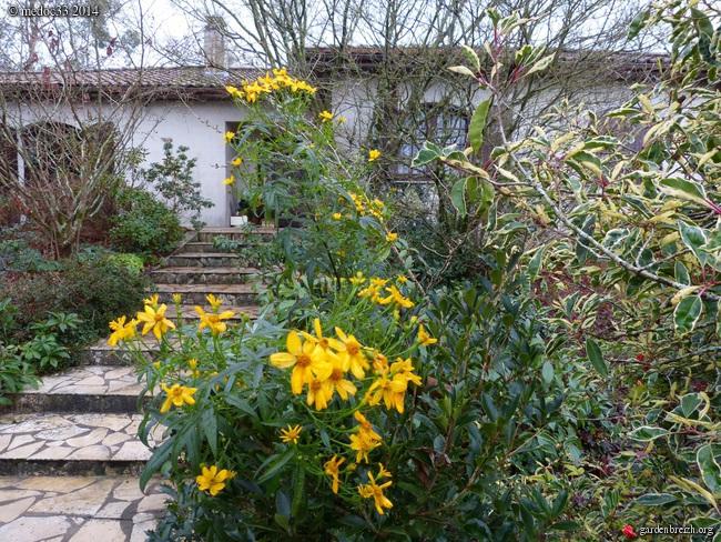 jardin des brumes - Page 5 GBPIX_photo_649966