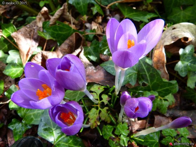 premiers sourires du jardin GBPIX_photo_657418