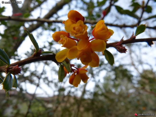 premiers sourires du jardin GBPIX_photo_657924