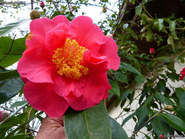 premiers sourires du jardin GBPIX_photo_657925
